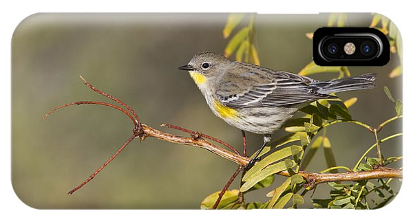 Yellow Rumped Warbler IPhone Case