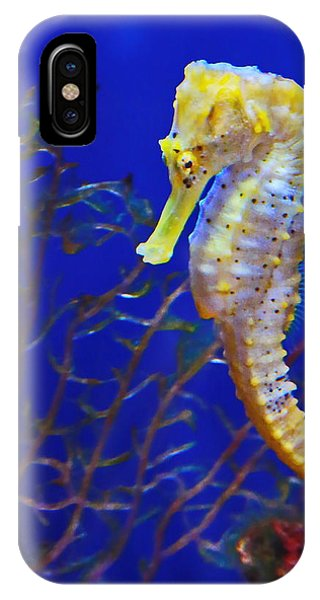 Yellow Sea Horse IPhone Case