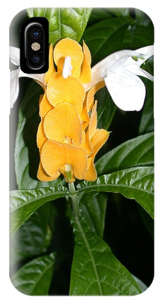 Yellow Shrimp Plant IPhone Case