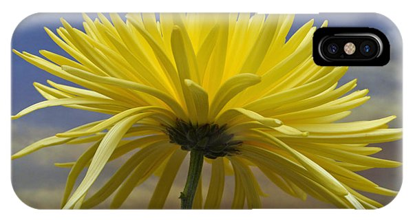 Yellow Spider Chrysanthemum IPhone Case