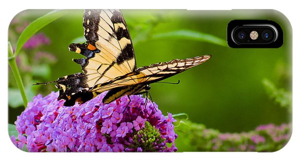 Yellow Tiger Swallow Tail Butterfly IPhone Case