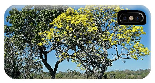 Yellow Trumpet iPhone Case - Yellow Trumpet Tree In Flower by Tony Camacho/science Photo Library