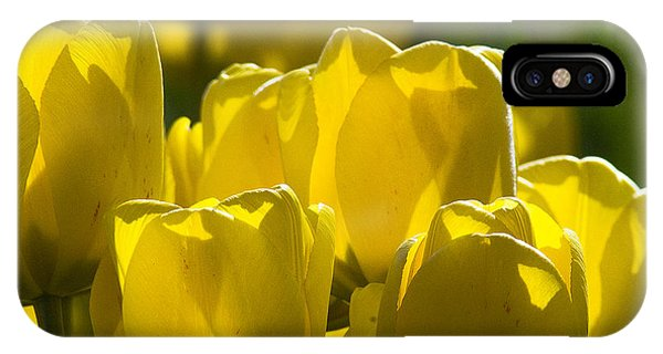 Yellow Tulips  IPhone Case