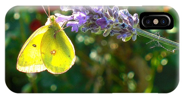 Yellow Wings On Lavendar IPhone Case