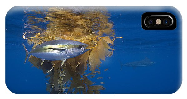 Yellowfin Tuna And Kelp Nine-mile Bank IPhone Case