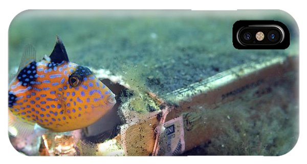 South Pacific Ocean iPhone Case - Yellowmargin Triggerfish by Scubazoo/science Photo Library