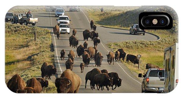Yellowstone Bison Jam IPhone Case