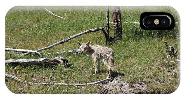 Yellowstone Coyote IPhone Case