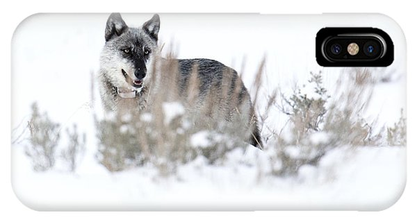 Yellowstone Wolf IPhone Case