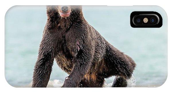 Brown Bear iPhone Case - Yogi by Giuseppe D\\\'amico