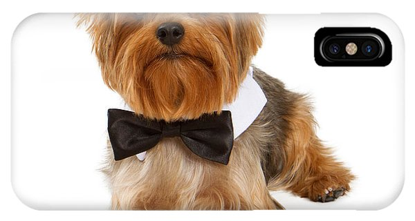 Yorkshire Terrier Dog With Black Tie IPhone Case