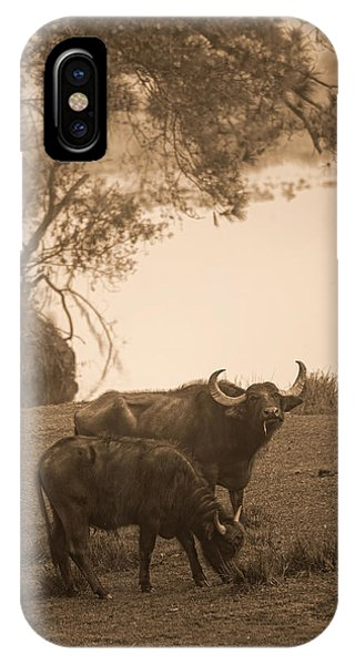You Lookin At Me Phone Case by Frank Feliciano