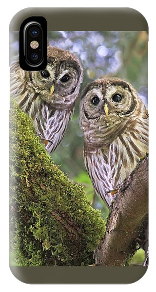 Young Barred Owlets  IPhone Case
