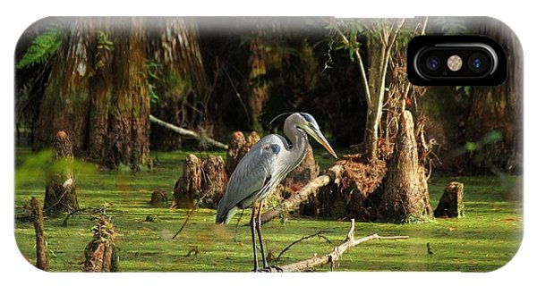 Young Blue Heron IPhone Case