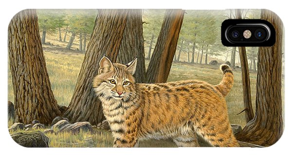 Yellowstone iPhone Case - Young Bobcat    by Paul Krapf