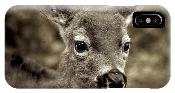 Young Curious Deer IPhone Case