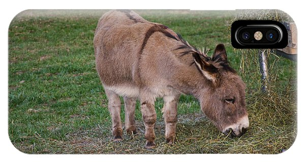 Young Donkey Eating IPhone Case