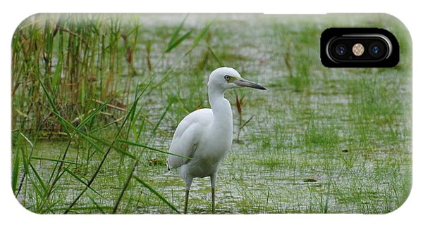 Juvenile Little Blue Heron At Willow Pond IPhone Case