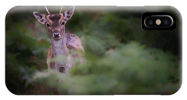 Young iPhone Case - Young Fallow Deer by Karen Deakin
