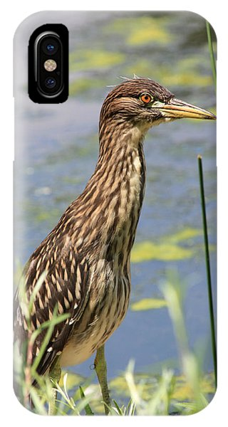 Young Heron IPhone Case