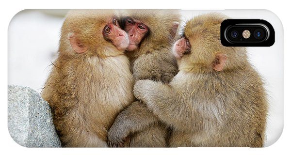 Adapted iPhone Case - Young Japanese Macaques by Dr P. Marazzi