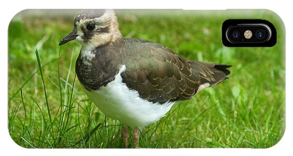 Young Lapwing IPhone Case