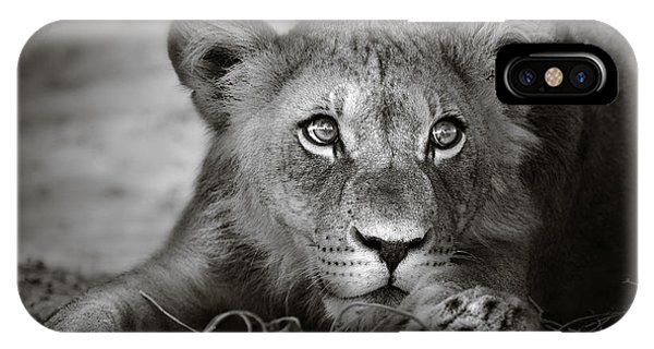Wild iPhone Case - Young Lion Portrait by Johan Swanepoel