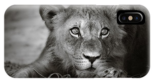 Monochrome iPhone Case - Young Lion Portrait by Johan Swanepoel