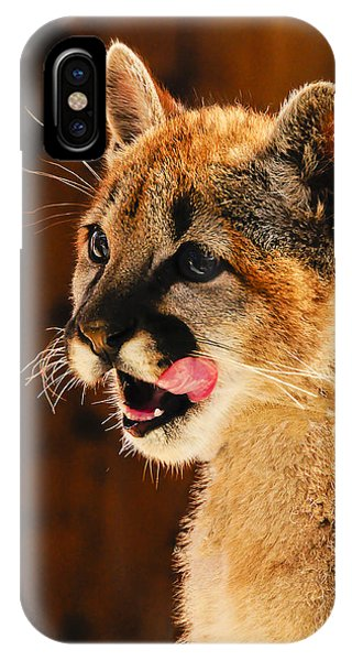 Young Mountain Lion IPhone Case