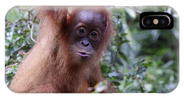 Young Orangutan Kiss IPhone Case