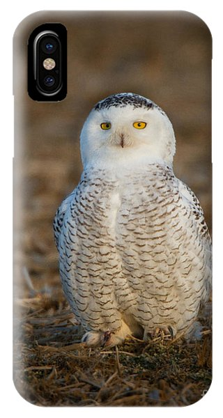 Young Snowy Owl IPhone Case