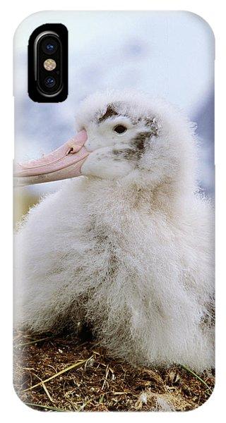 Albatross iPhone Case - Young Wandering Albatross (diomendea by Martin Zwick