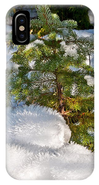 Young Winter Pine IPhone Case
