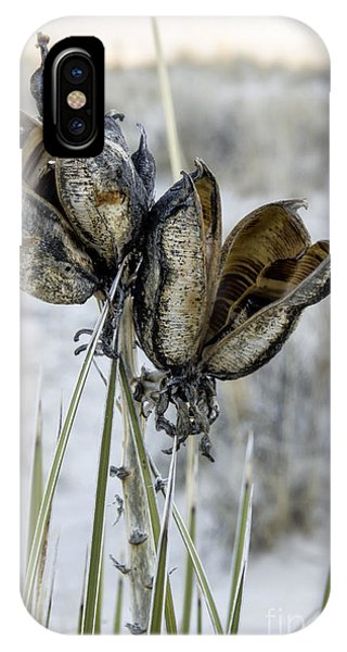 Yucca Seed Pods IPhone Case