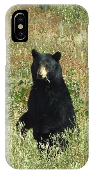 IPhone Case featuring the photograph Yukon Black Bear by Barbara Von Pagel