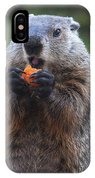 Groundhog iPhone Case - Yum-yum by Paul W Faust -  Impressions of Light