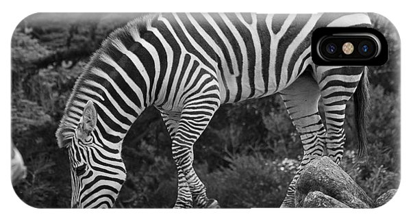 Zebra In Black And White IPhone Case