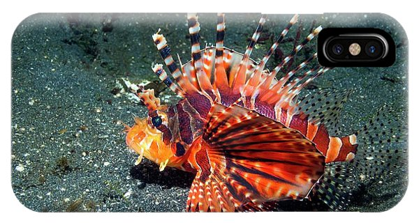 Ichthyology iPhone Case - Zebra Lionfish by Georgette Douwma