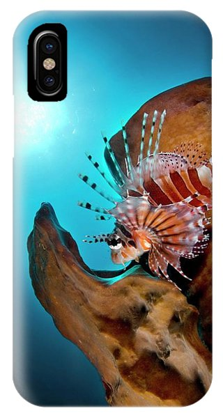 South Pacific Ocean iPhone Case - Zebra Lionfish by Scubazoo/science Photo Library