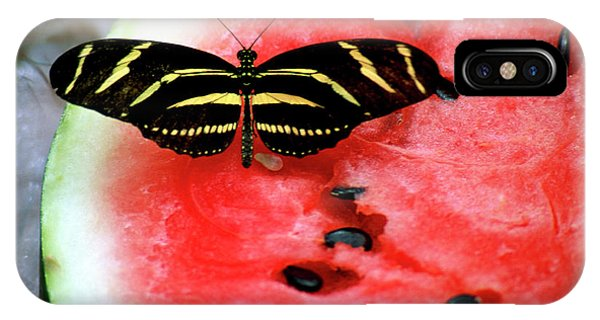Zebra Longwing Butterfly On Watermelon Slice IPhone Case