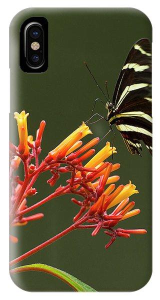 Scarlet iPhone Case - Zebra Longwing On Fire Bush Flowers by Maresa Pryor