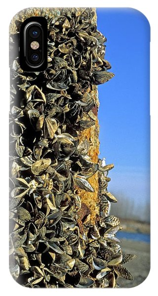 Zebra Mussels Phone Case by Jim West