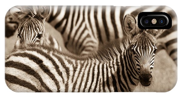Zebra Stripes Galore IPhone Case