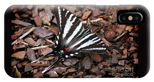 Zebra Swallowtail Butterfly IPhone Case