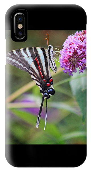 Zebra Swallowtail Butterfly On Butterfly Bush  IPhone Case