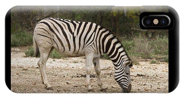 Zebra Symbol Of IPhone Case