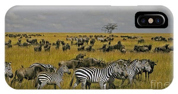 Zebras And Wildebeast   #0861 IPhone Case