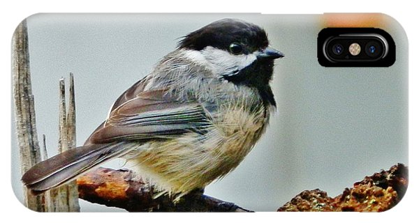Zen Chickadee IPhone Case