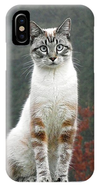 Zing The Cat IPhone Case