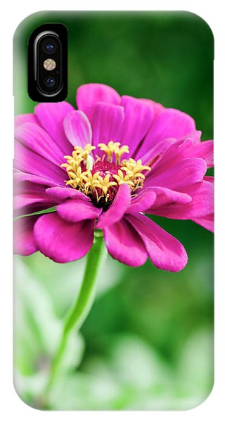 Zinnia Flower (zinnia Sp.) Phone Case by Gustoimages/science Photo Library